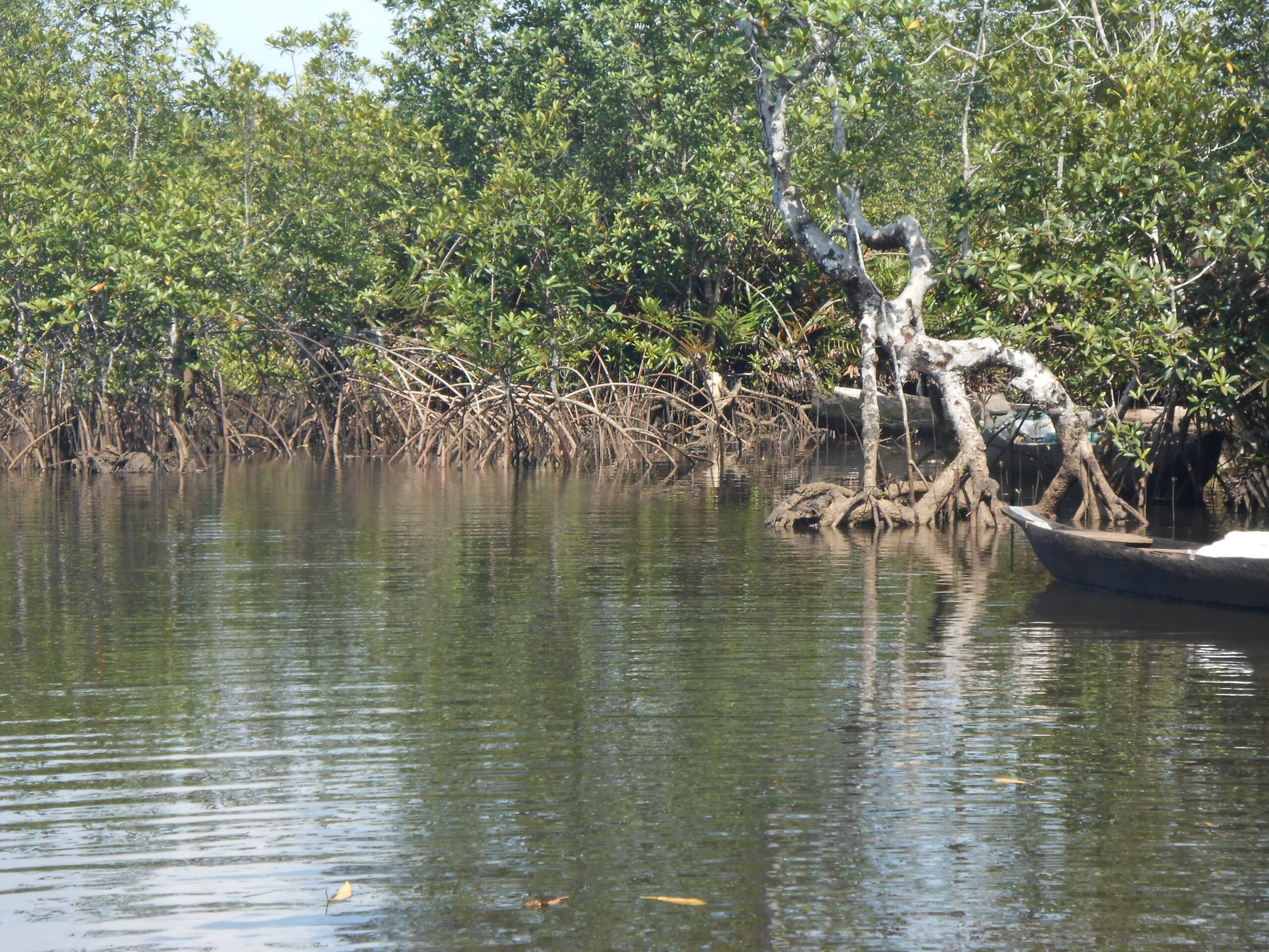 Projet CAMERR | Cameroon Mangrove Ecosystem Restoration and Resilience