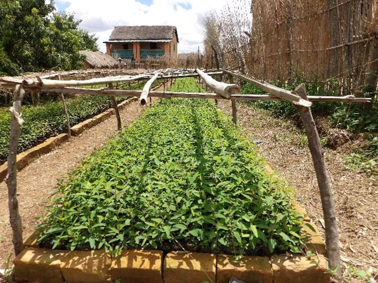 Projet DIABE | Développement Intégré, Aménagement et Bois-Energie