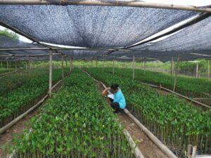 indonésie reforestation