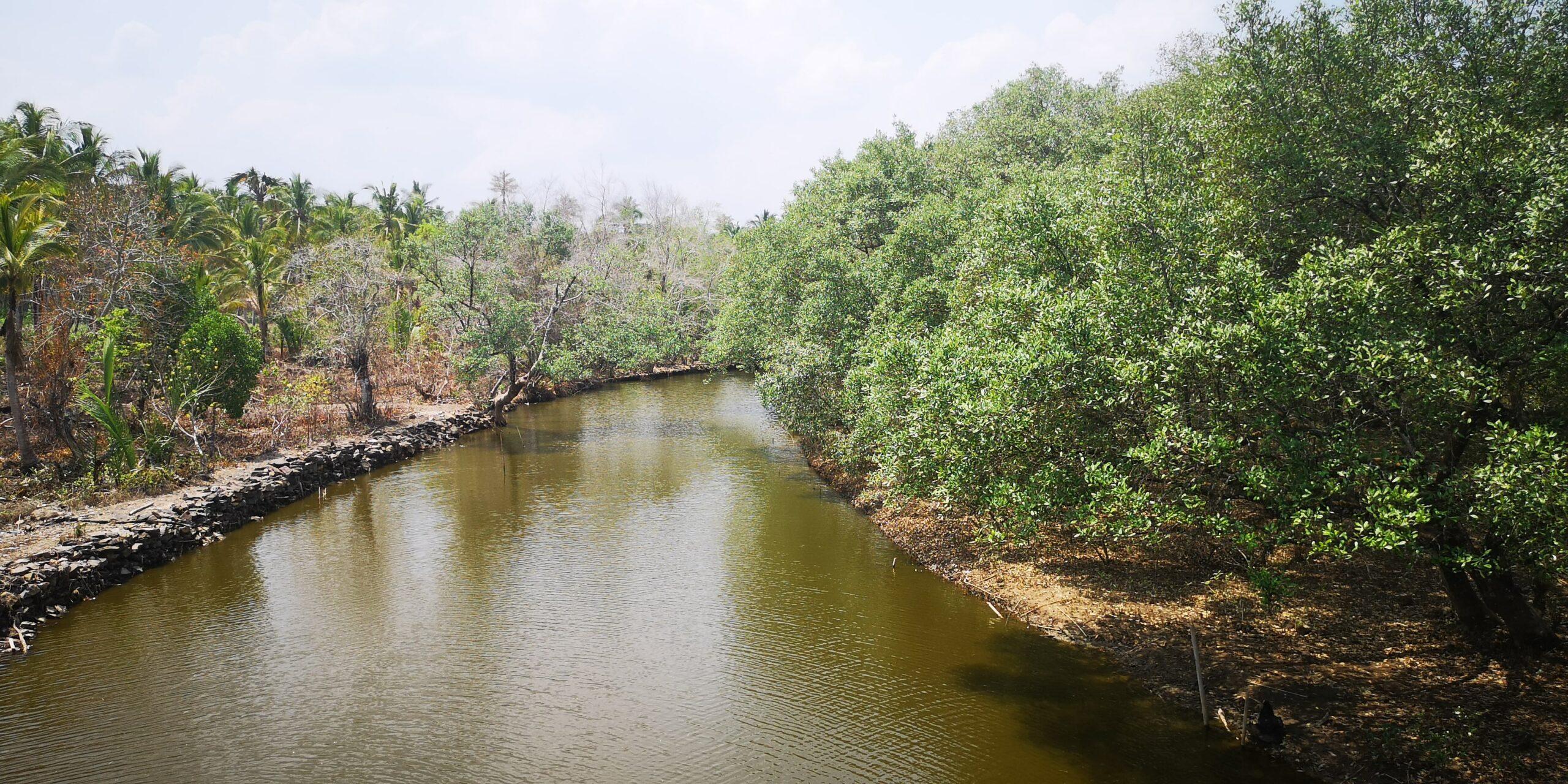 Environnement & Développement Planète urgence