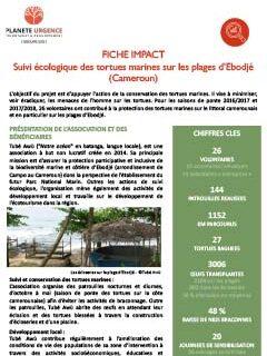 Suivi des tortues marines sur les plages d'Ebodje - Cameroun
