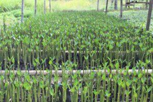 indonésie reforestation planète urgence