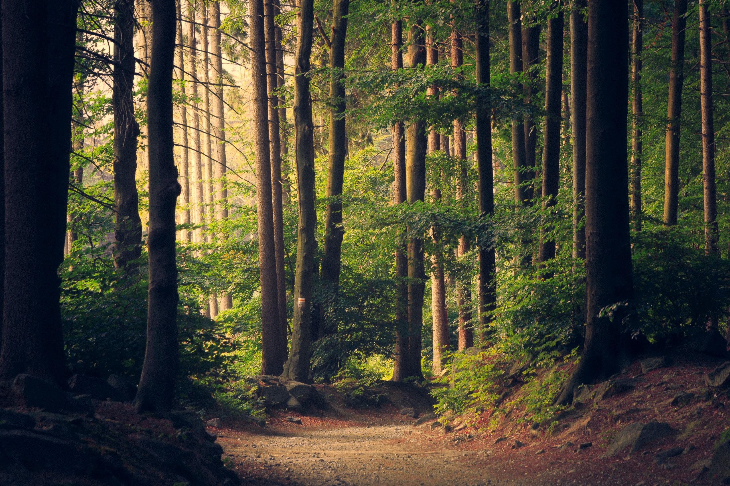 Agir pour la forêt