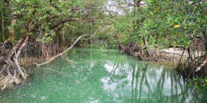 MERCI reforestation planète urgence
