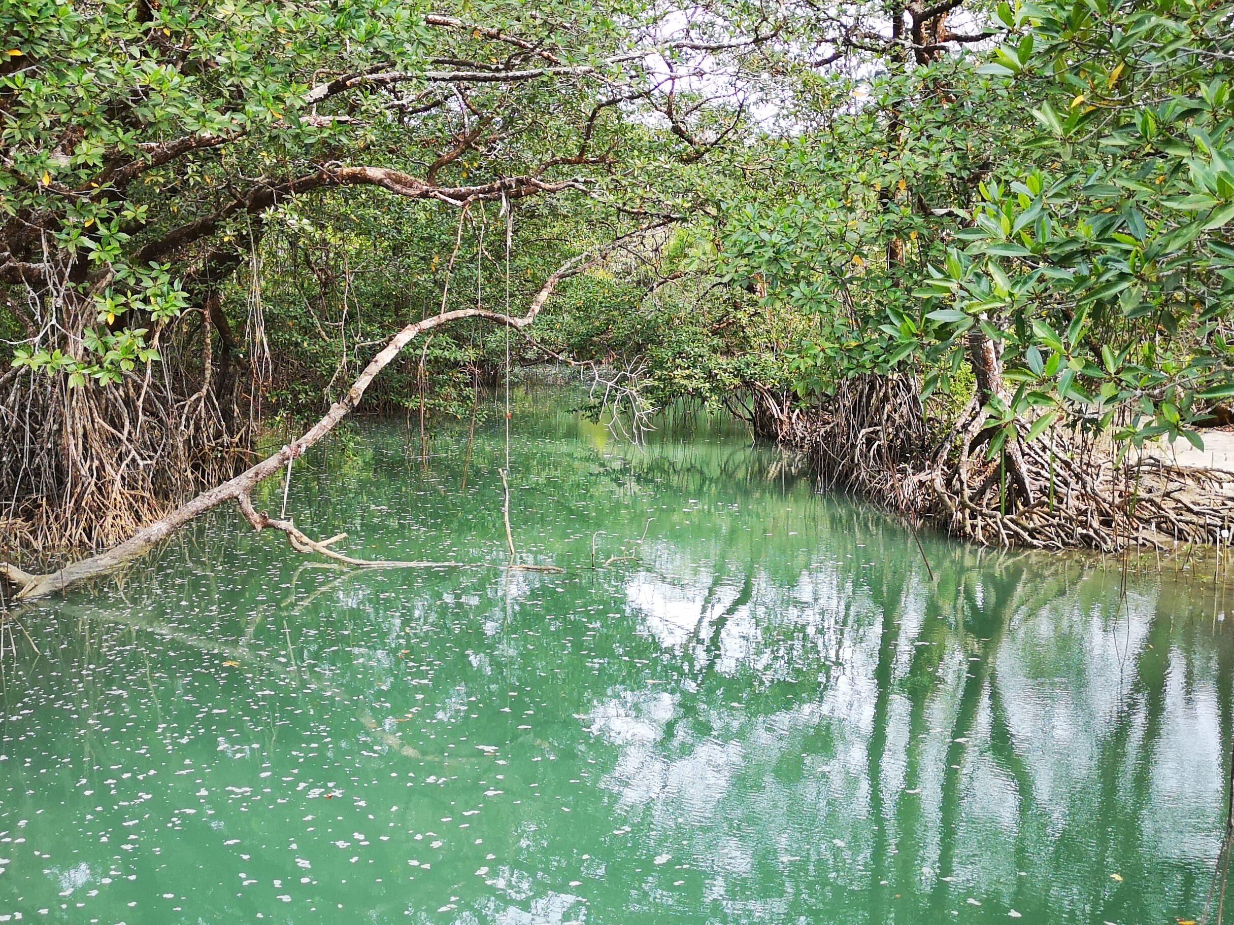 Projet MERCI | Mangrove Ecosystem and Javan Rhinoceros Conservation in Indonesia