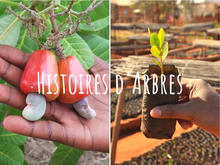 «Histoires d'Arbres» en Indonésie: à la rencontre des mangroves et rhinocéros de Java