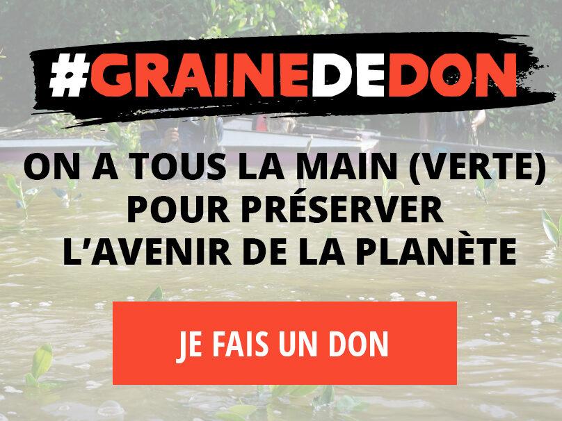 Graine de don, la campagne de fin d'année de Planète Urgence