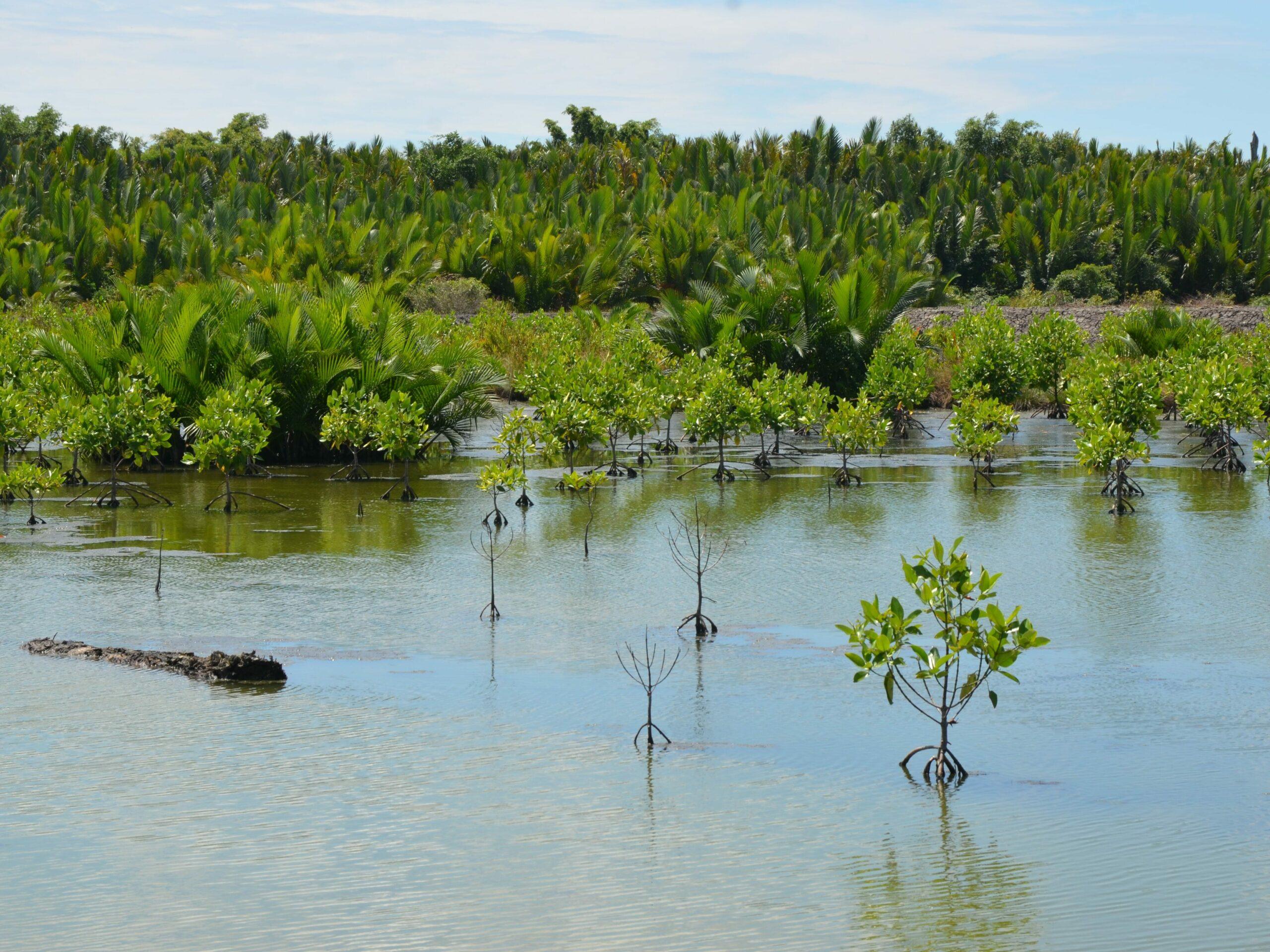 Projet MAHAKAM | Restauration de mangrove et développement local